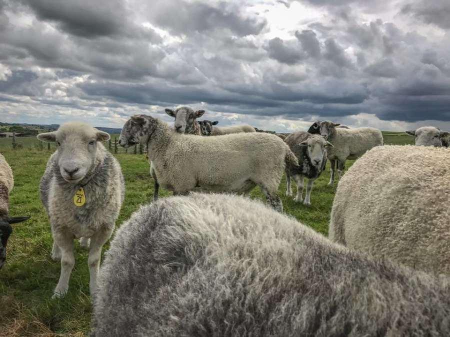 The Living Rug Company Flock