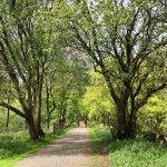 A Family Bike Ride - Circular Trail from Parsley Hay