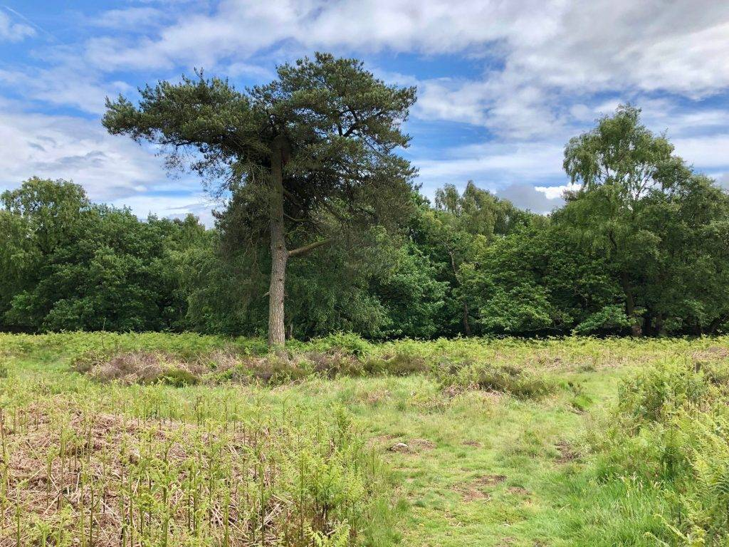 Padley Gorge and Surprise View (4.5 miles) 7