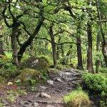 Padley Gorge and Surprise View (4.5 miles)