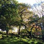 National Trust: Volunteering in the Peak District