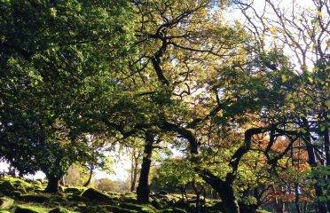 National Trust: Volunteering in the Peak District