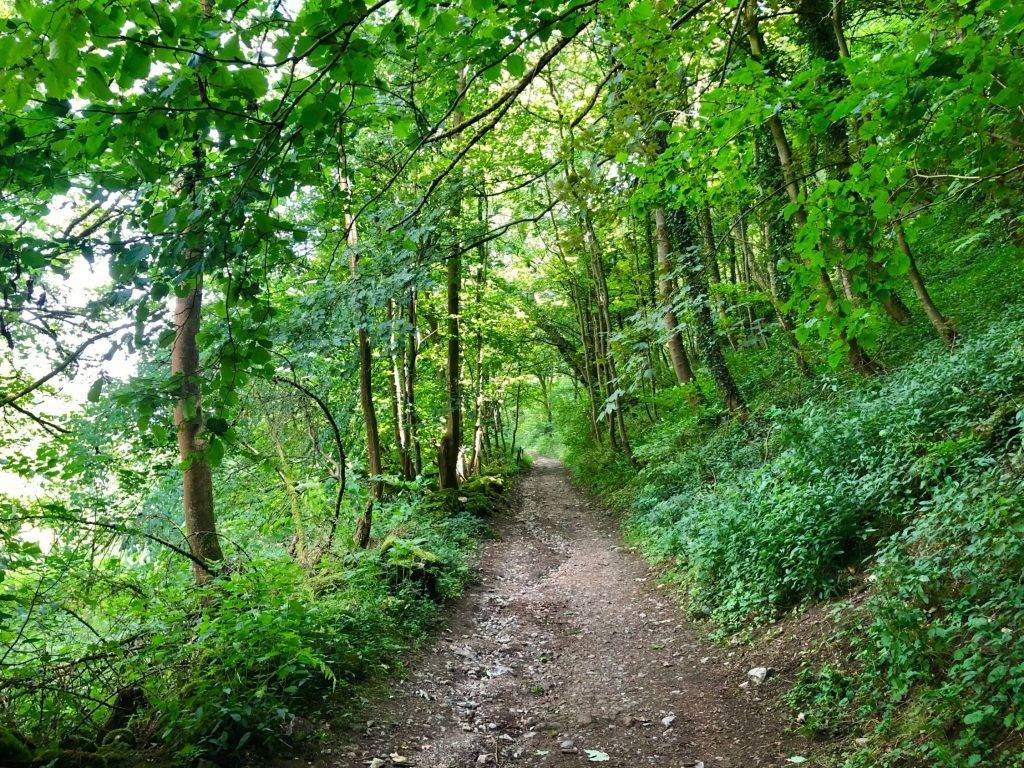 Beautiful Youlgreave Walk