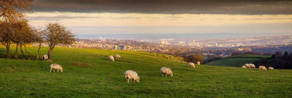 Sheffield 1