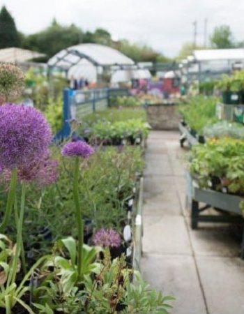 Calver Sough Nurseries