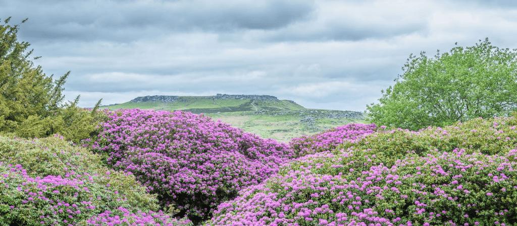 National Trust: Volunteering in the Peak District 2