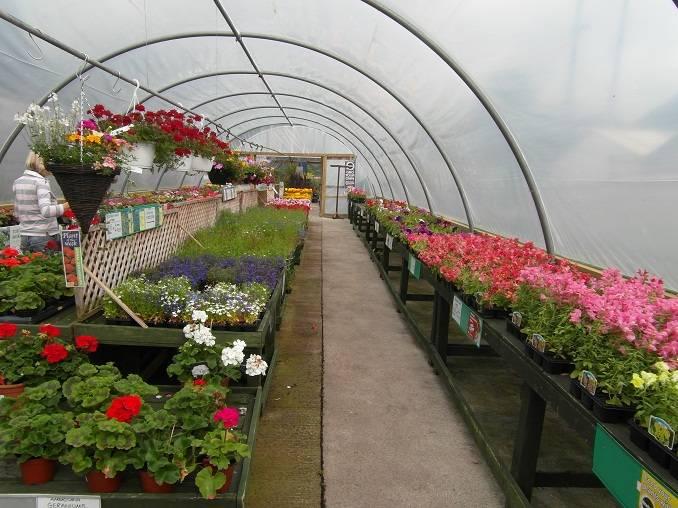 Calver Sough Nurseries 1
