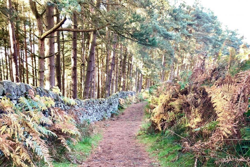 Derwent Edge (2.5 miles) 2