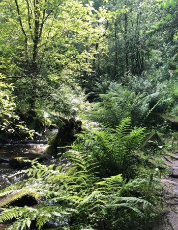 Wyming Brook