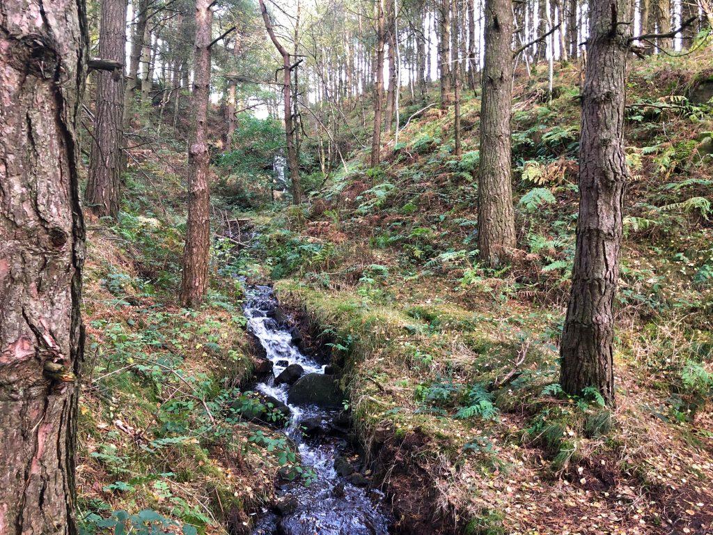 Beeley Walk stream
