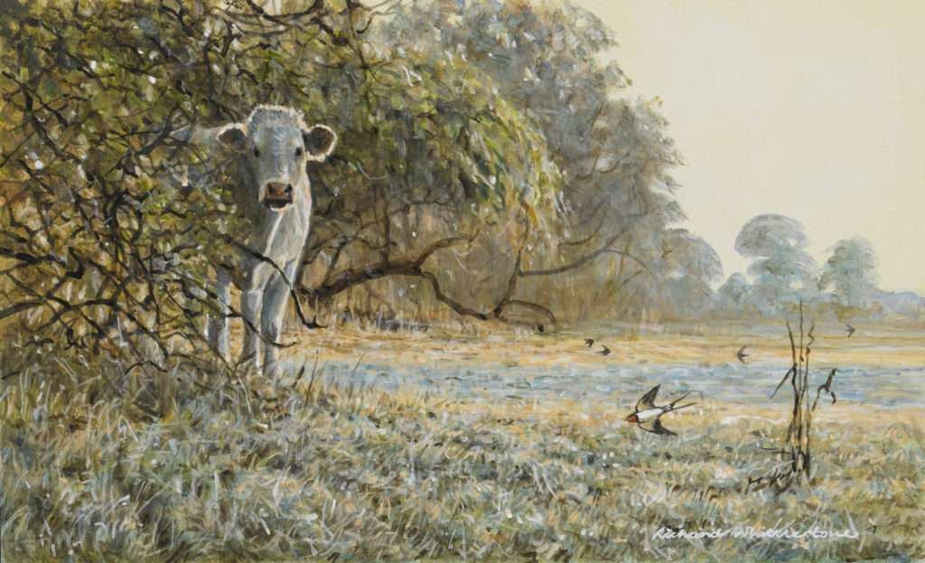 Richard Whittlestone Wildlife Gallery 2