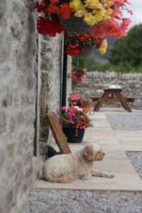 Speedwell House Holiday Cottages 1