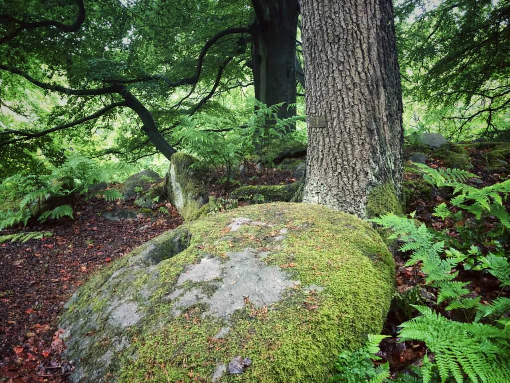 The Intriguing Millstones of the Peak District | Padley Gorge