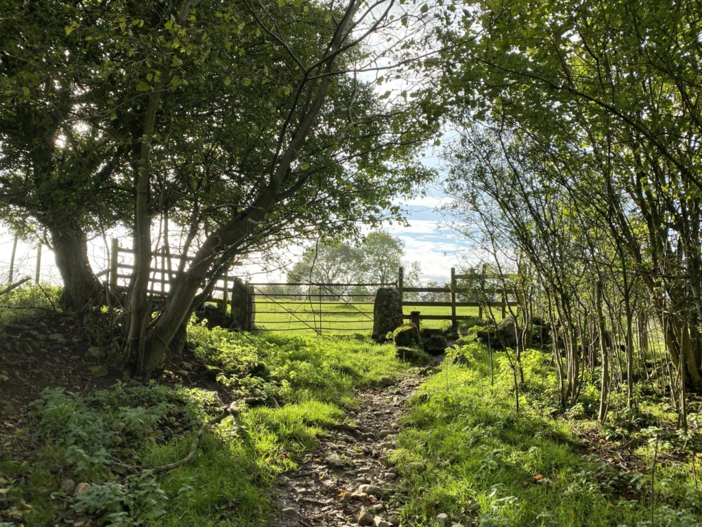 Parwich Walk